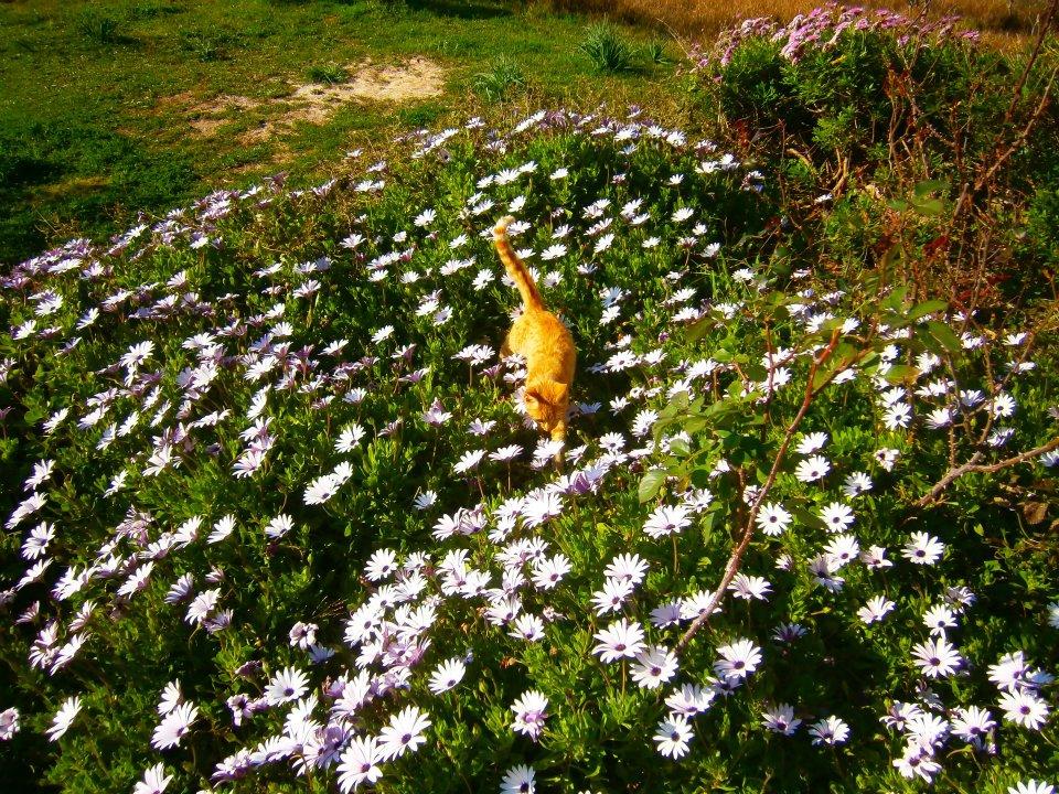 Urlaub auf dem Bio Bauernhof / Korfu