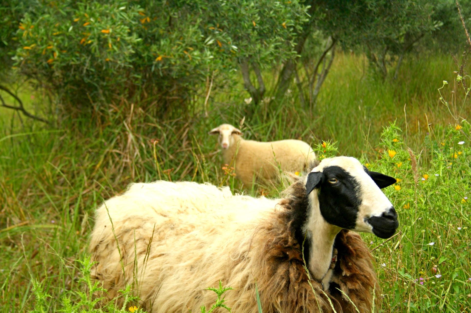 Groß und Klein können die Tiere des Landgutes kennenlernen